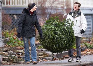 christmas tree bazaar christmas tree couple